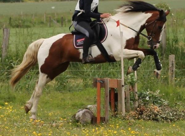 Ecurie des Fées - les chevaux de club